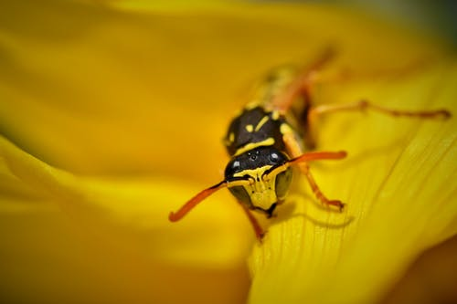 Close Up Photo of Yellow Flower with Black and Yellow Insect