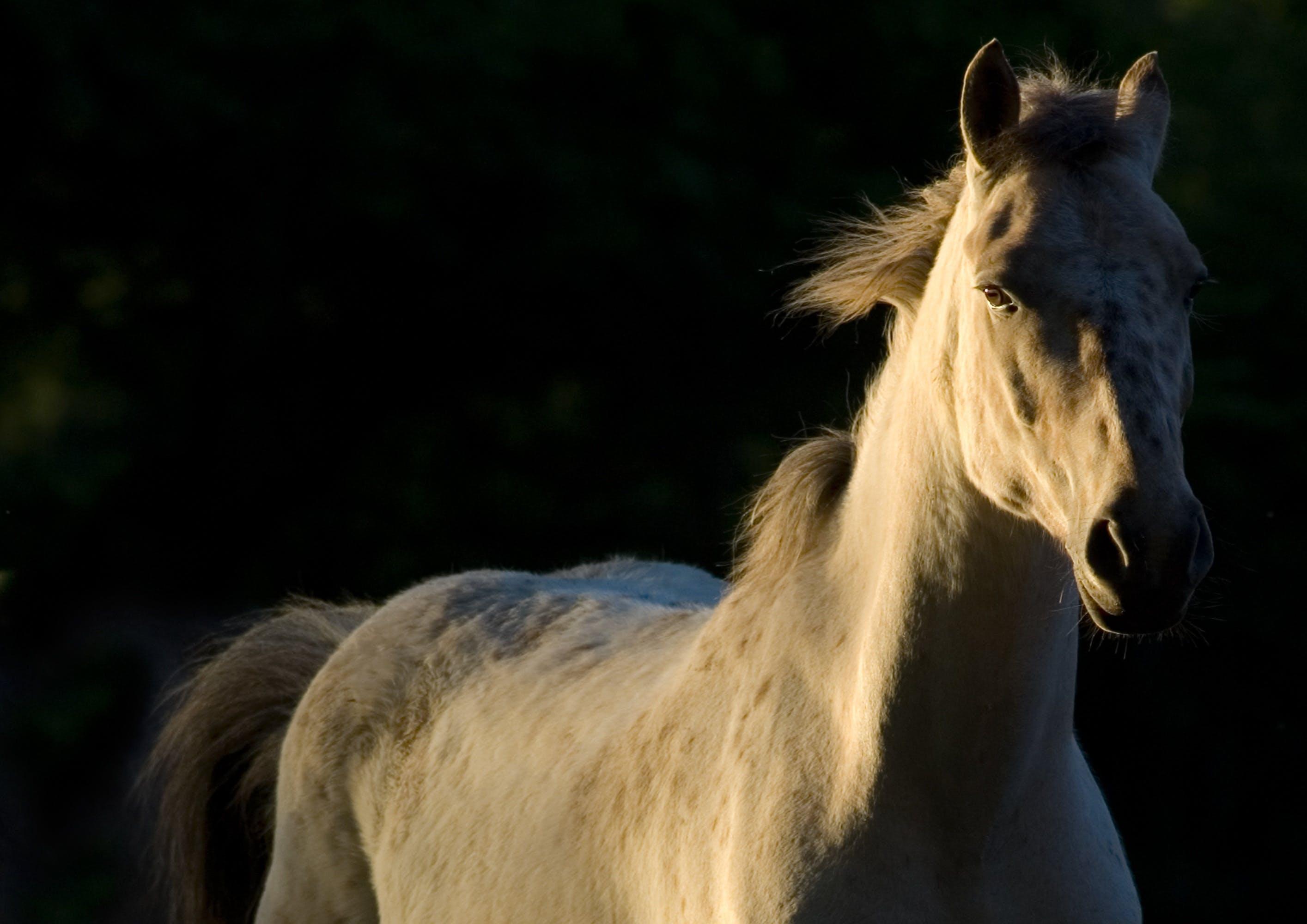 Free stock photo of animal, equine, free, horse