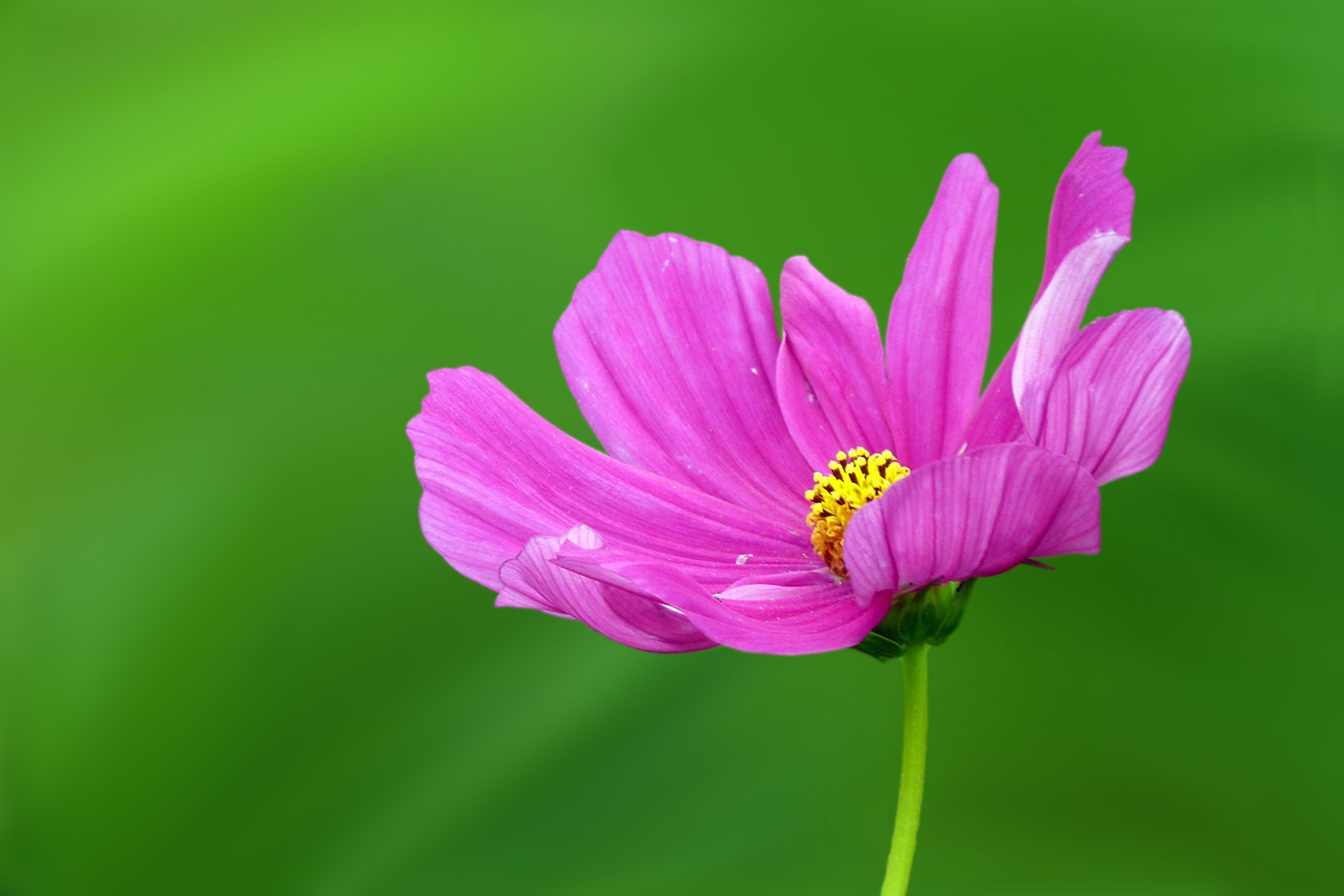 flóra, jasný, jemný