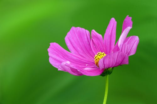 Ảnh lưu trữ miễn phí về cận cảnh, cánh hoa, đẹp, hệ thực vật