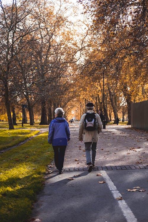 Základová fotografie zdarma na téma chůze, hyde park, Londýn, podzim