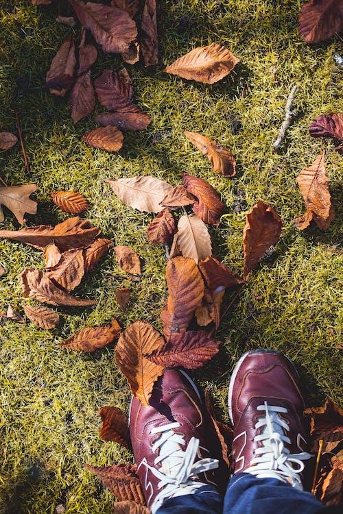Free stock photo of autumn, autumn leaves, New Balance, shoes
