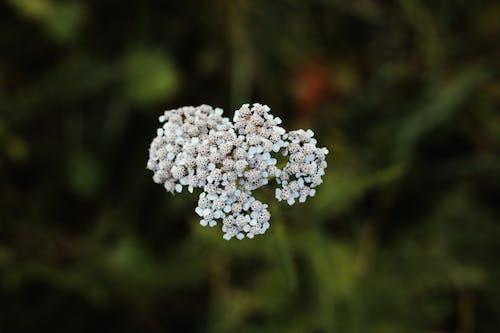Immagine gratuita di concentrarsi, contrasto, fiore, focalizzare