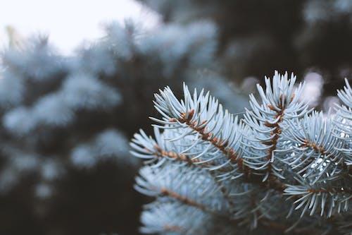 冬天的背景, 冬季, 冬季仙境, 冷 的 免費圖庫相片