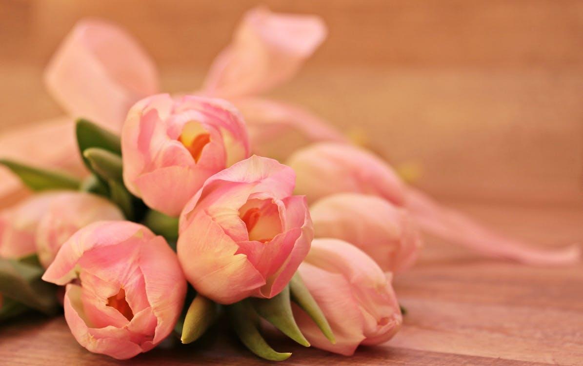 begroeting, bloeien, bloeiend
