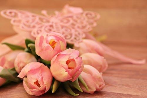 Fotobanka sbezplatnými fotkami na tému čerstvý, flóra, jemný, krásny