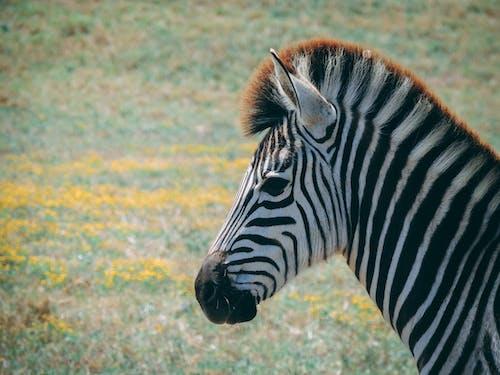 Free stock photo of Addo, adventure, africa, animal