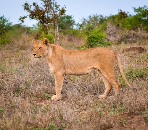 Free stock photo of adventure, africa, animal, animals