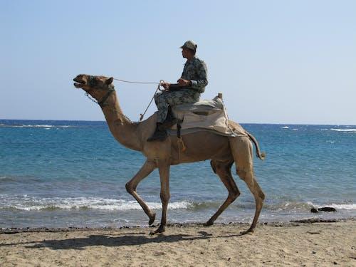 Základová fotografie zdarma na téma arabské velbloudy, moře, ovládání, potápění