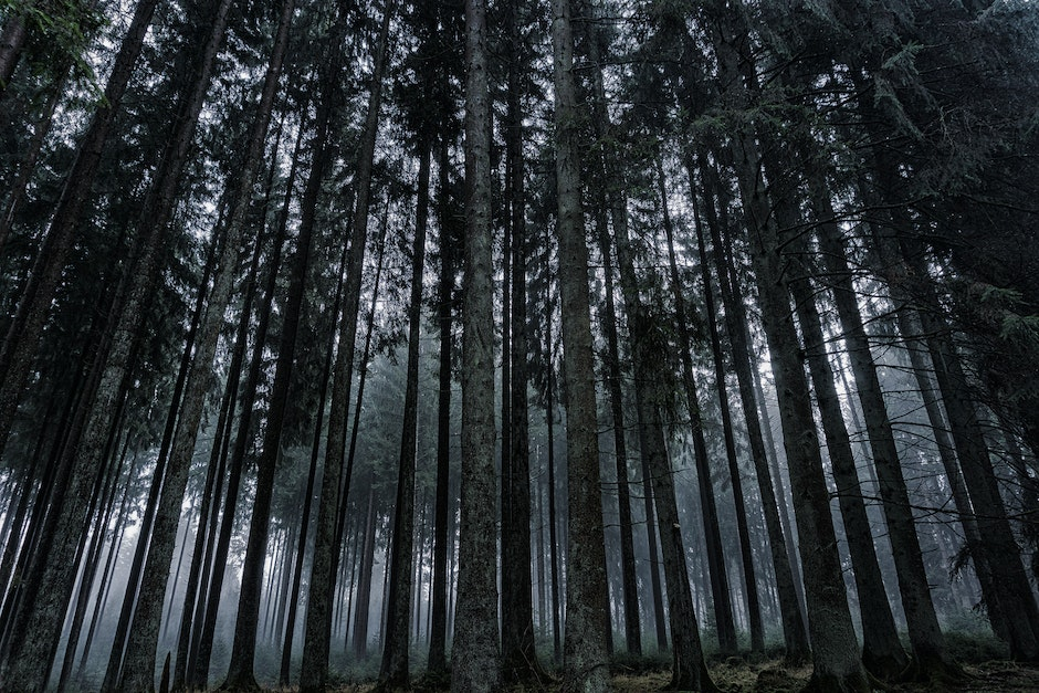 Low Angle View of Trees in Forest Against Sky