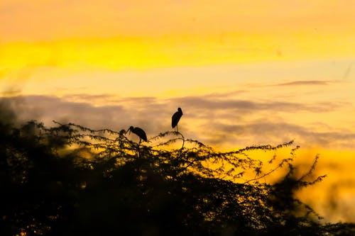 Základová fotografie zdarma na téma pozorování ptáků, ptáci, ptačí budka, rajky