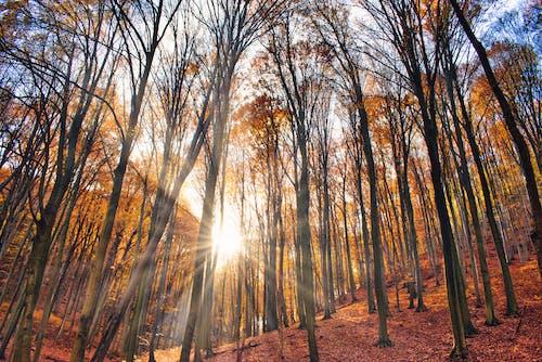 Δωρεάν στοκ φωτογραφιών με background, obanya, ακτίνα ήλιου, ακτίνες