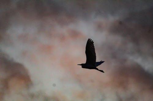 Základová fotografie zdarma na téma létání, ptáci, pták