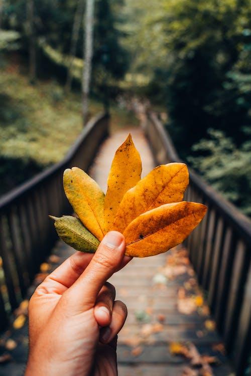 Foto stok gratis Daun-daun, dedaunan musim gugur, jatuh, makro