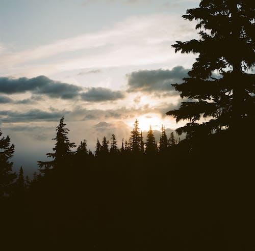 戶外, 森林, 西北太平洋, 远足 的 免费素材照片