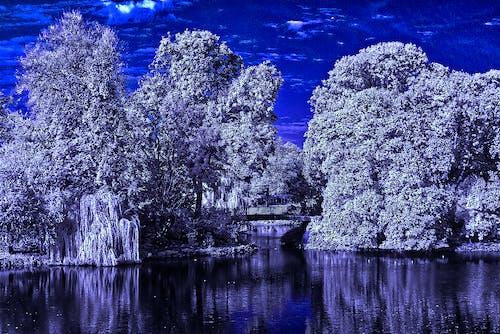 물, 미러링, 적외선의 무료 스톡 사진