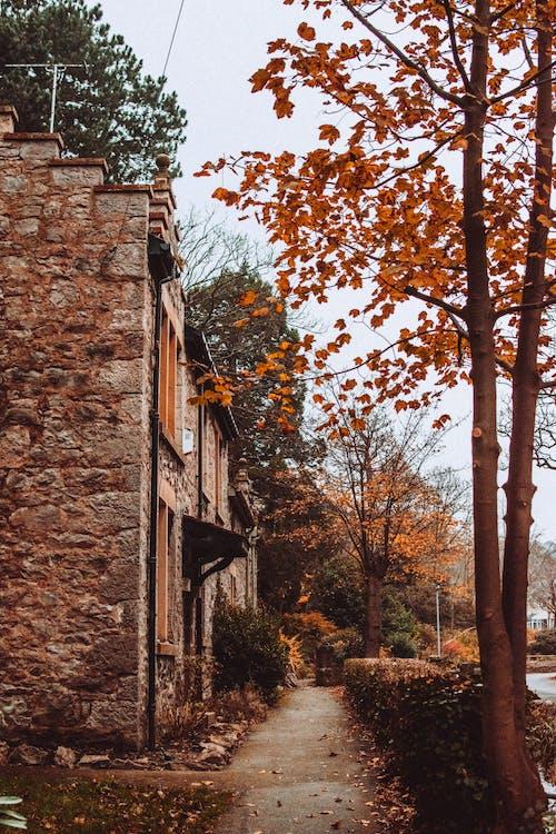 Бесплатное стоковое фото с архитектура, деревья, дневной свет, дом