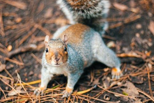Free stock photo of animal, natural, squirrel