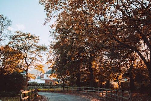 Ilmainen kuvapankkikuva tunnisteilla aamu, aita, kaunis, luonto