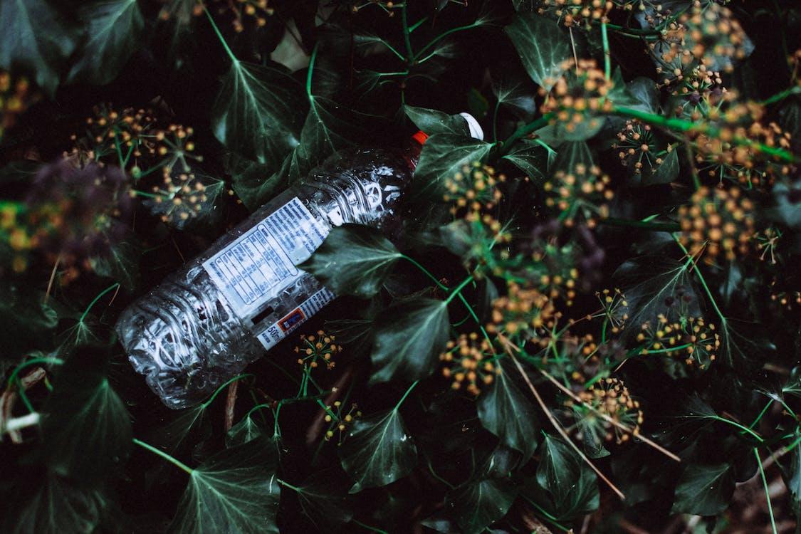 juoma, kasvi, kierrättää