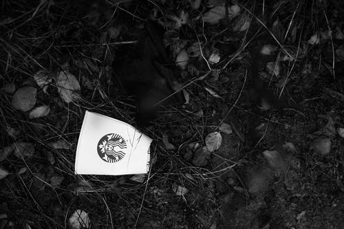 Starbucks Disposable Cup on Soil