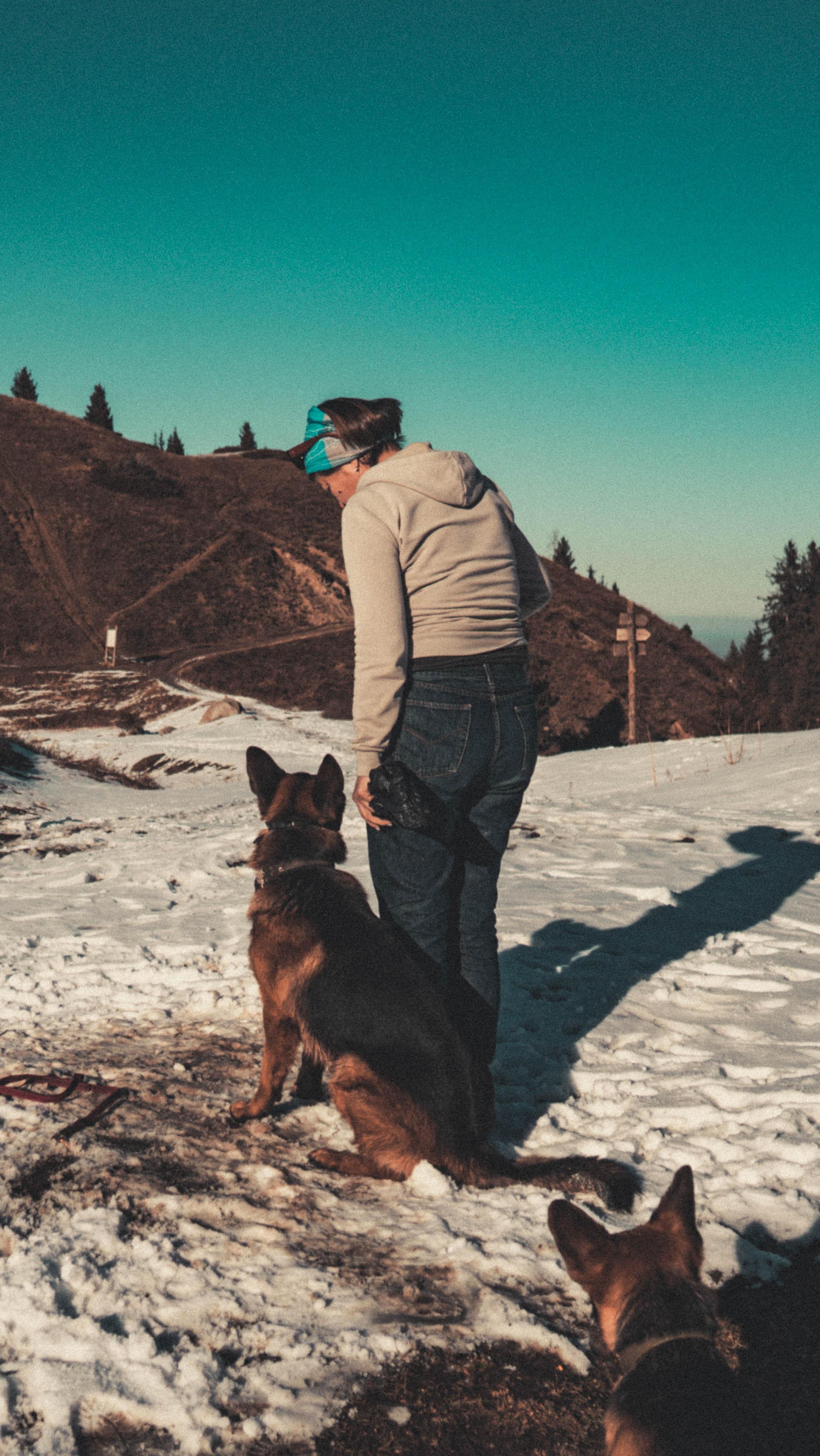 German shepherd looking at landscape stock photo download image.