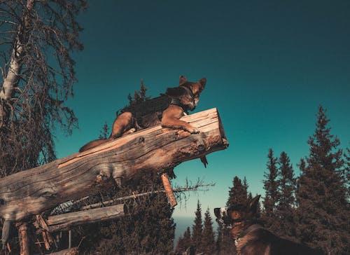 คลังภาพถ่ายฟรี ของ #หมา, ภูเขา