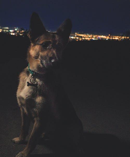คลังภาพถ่ายฟรี ของ #หมา, กลางคืน, คืนเมือง, แสงไฟของเมือง