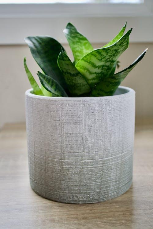 Free stock photo of dark green plants, decorative plants, green