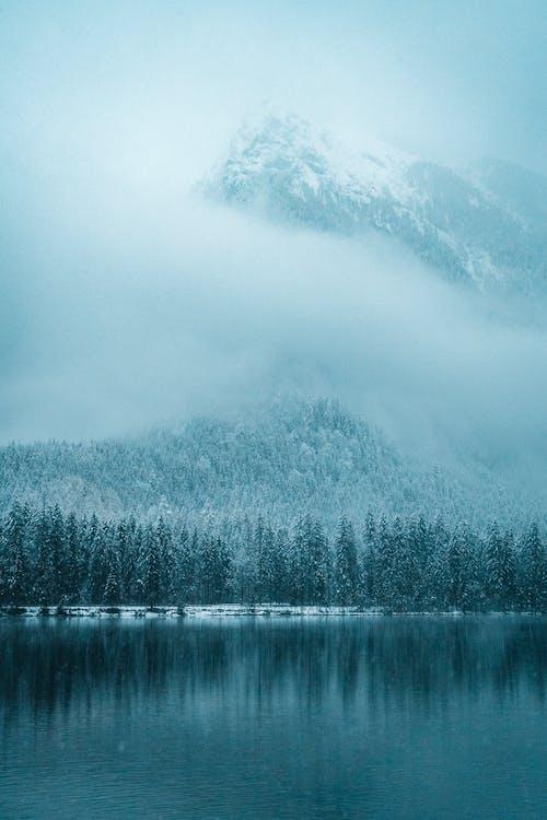 คลังภาพถ่ายฟรี ของ การสะท้อน, ต้นไม้, ทะเลสาป, น้ำค้างแข็ง