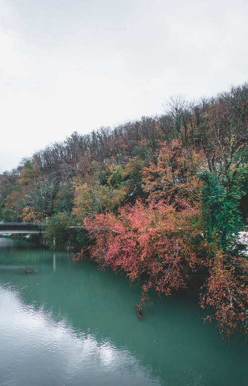 Free stock photo of asturias, autumn color, cold, river