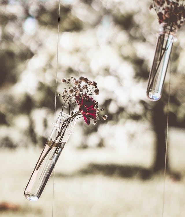 amor, arbre, art