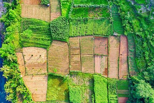Imagine de stoc gratuită din aerian, agricultură, cameră de dronă, câmp