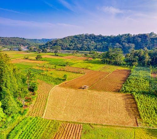 Fotobanka sbezplatnými fotkami na tému dedinský, hracie pole, ihrisko, kamera dronu