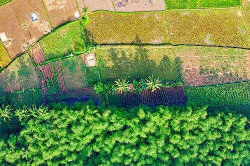 Aerial Photography of Farmland