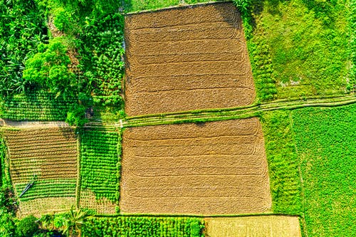 Aerial Photo of Cropland