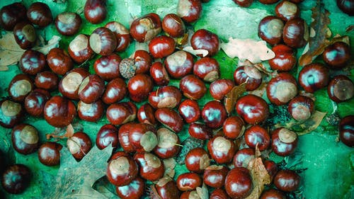 Free stock photo of autumn, chestnut, forest