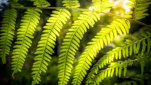 Free stock photo of autumn, fern, forest