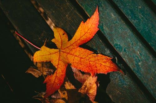 Gratis arkivbilde med årstid, falne blader, farge, høst