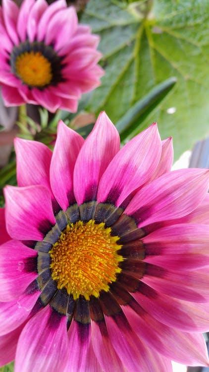 detailný záber, divé kvety, flóra