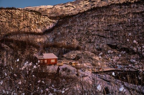 Základová fotografie zdarma na téma dřevěný, dřevo, geologie, hora