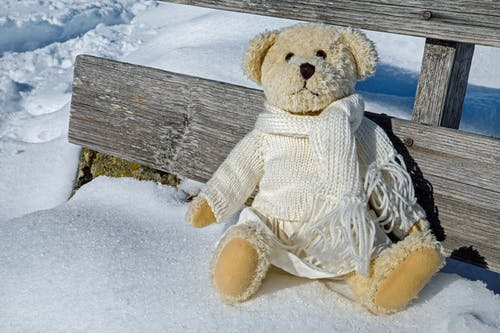 Photos gratuites de animal en peluche, bois, froid, gel