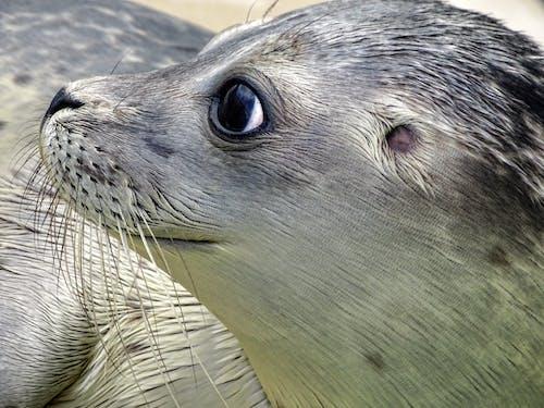 Δωρεάν στοκ φωτογραφιών με άγρια φύση, άγριος, αξιολάτρευτος, αρπακτικό
