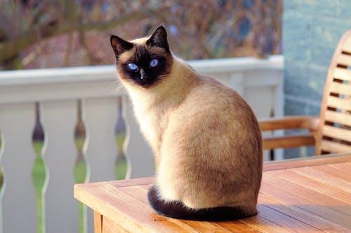 かわいらしい, キティ, ネコ, ひげの無料の写真素材