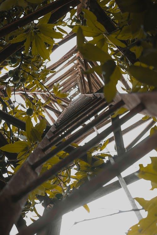 Darmowe zdjęcie z galerii z portret