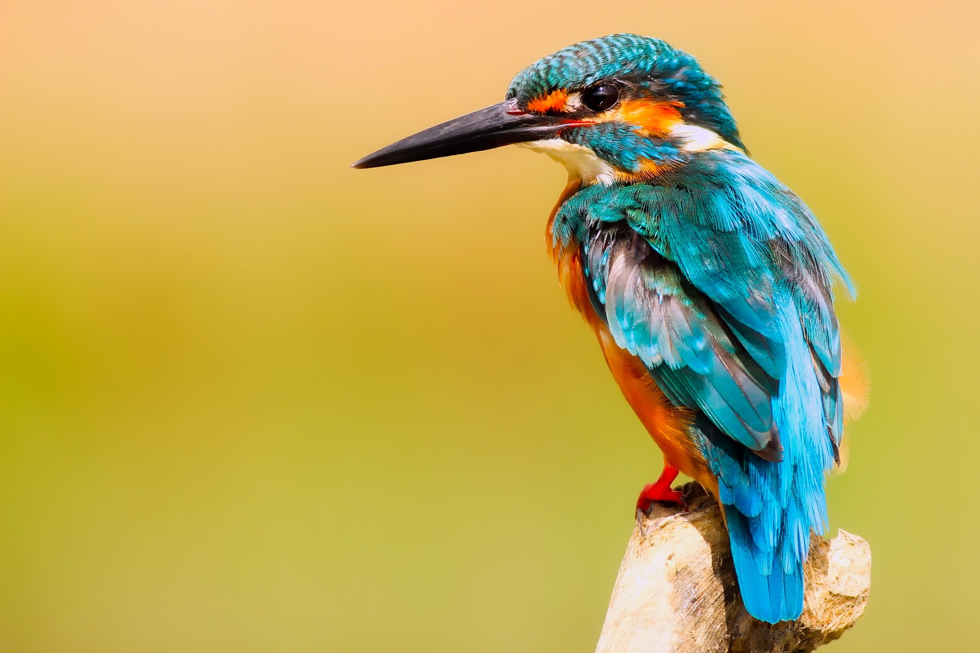 999+ Colorful Bird Pictures · Pexels · Free Stock Photos