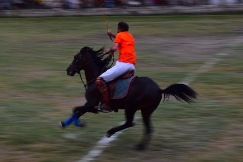 Foto d'estoc gratuïta de cavall, joc, joc de polo, les carreres de cavalls