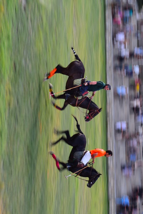 Foto d'estoc gratuïta de cavall, cavall de carrera, chitral, genet
