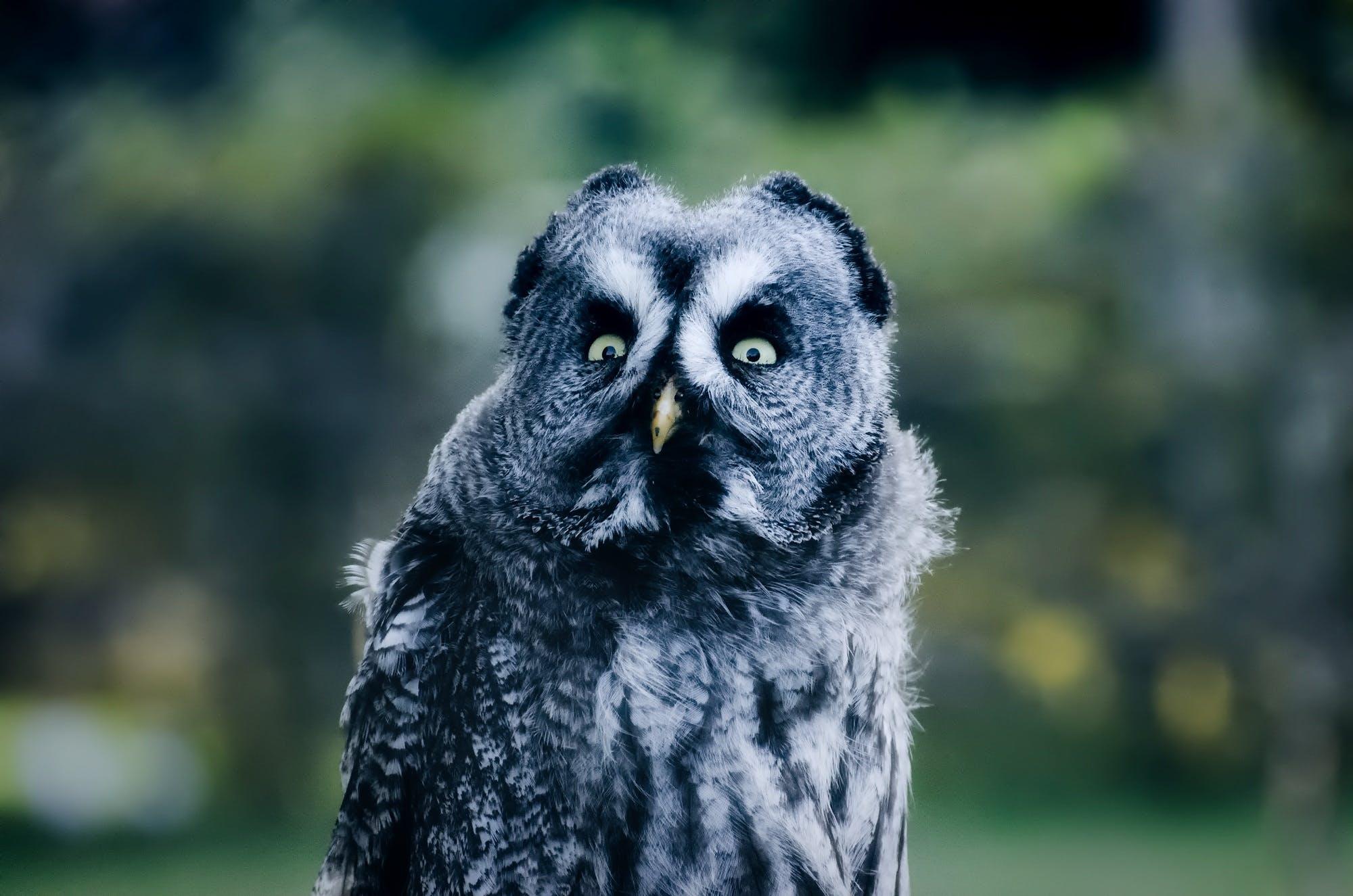 Free stock photo of bird, outdoors, owl, hdr
