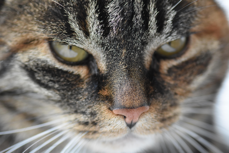 e3044c2ef9d8 Δωρεάν στοκ φωτογραφιών με Γάτα